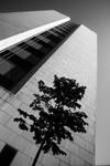 ROCKEFELLER RESEARCH BUILDING by The Rockefeller University