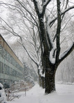 SNOW DAY by The Rockefeller University