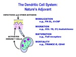 The Dendritic Cell System