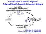 Dendritic Cells as Nature's Adjuvant by Steinman Laboratory