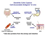 Dendritic Cells Capture Cell-Associated Antigens In Vivo