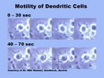 Motility of Dendritic Cells