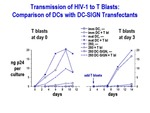 Transmission of HIV-1 to T Blasts by The Rockefeller University