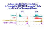Antigen From EL4/GalCer by Steinman Laboratory