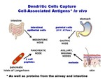 Dendritic Cells Capture Cell-Associated Antigens In Vivo by Steinman Laboratory