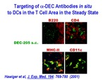 Targeting of α-DEC Antibodies In Situ to DCs in the T Cell Area by Steinman Laboratory
