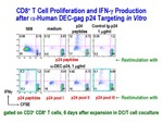 CD8+ T Cell Proliferation by Steinman Laboratory