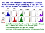 DEC and 33D1 Antibodies Target the LACK Antigen by Steinman Laboratory